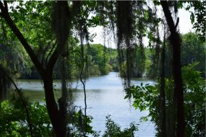 Florida and Golf - a long love affair Florida Vacation Homes